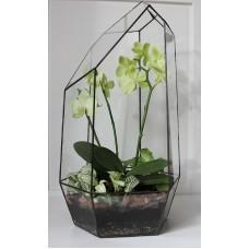 "Флорариум с орхидеями ""Утро"""