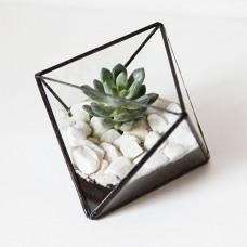 """Растение в вазе """"Minima.лист"""", сад в бутылке"""