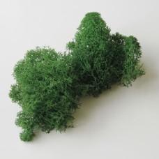 Мох стабилизированный 25 г. зеленый  (2-029)