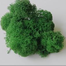 Мох стабилизированный 25 г. зеленый  (2-032)
