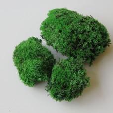 Моховая кочка стабилизированная  (зеленый  2-034)